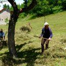 Râtelage du foin à l'ancienne - San Michele