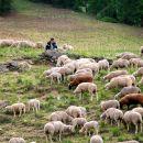 Jour 3-berger et ses moutons