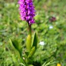 Jour 5-orchidée