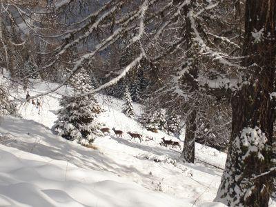 Photo Alpages enneigés de la Clarée
