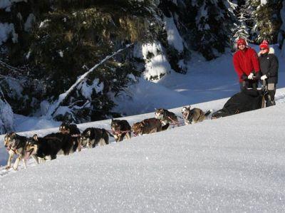 Chiens de Traineau - Multi-activité Famille dans les Hautes-Alpes