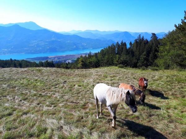 chevaux au-dessus d'embrun
