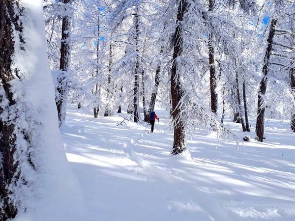 Forêt couverte de neige poudreuse dans le Queyras