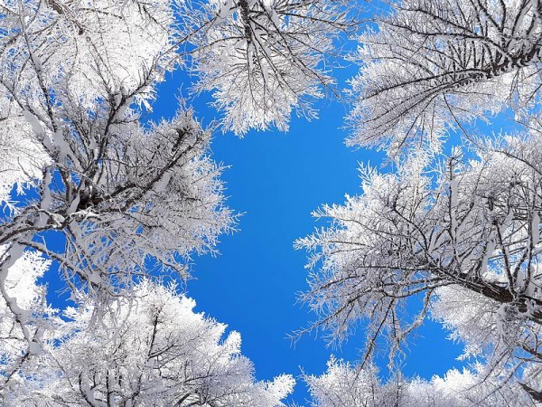 Forêt recouverte de neige poudreuse dans le Queyras