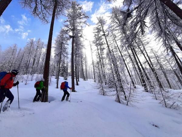ski dans le mélézin Queyras