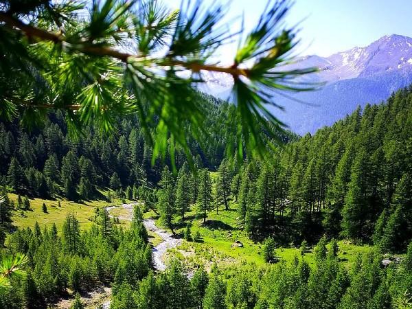 Mélèzin - Parc Naturel du Queyras
