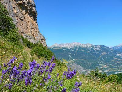 Lavandes et vue sur la vallée de la Durance au Ponteil
