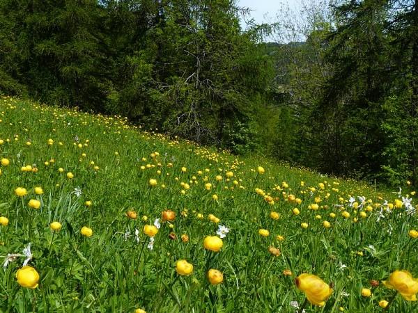 Paysages champêtres -  Sur le chemin de Saint-Jacques de Compostelle dans les Alpes