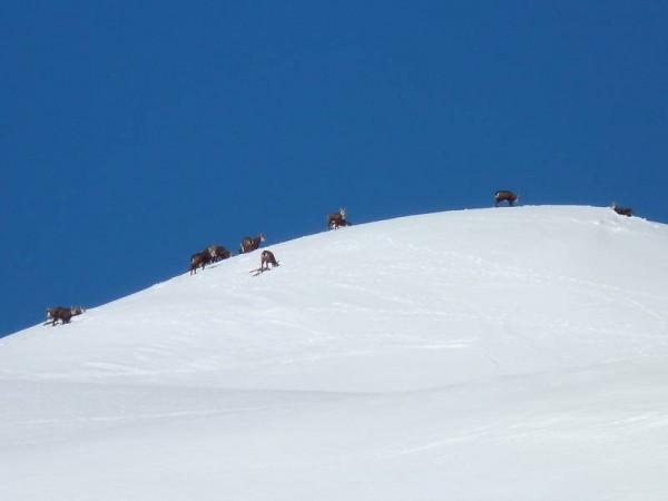 Jour 3 séjour raquettes aux bains du monetier vallée de cervières chamois sur la neige