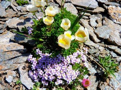 composition de fleurs de montagne