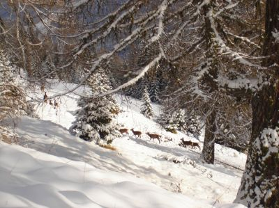 Photo Ecrins de neige